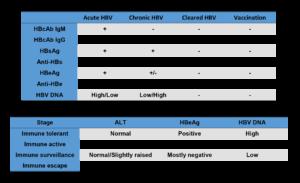 Hepatitis B - interpreting viral serology